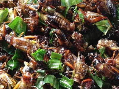 Жареные насекомые в Таиланде